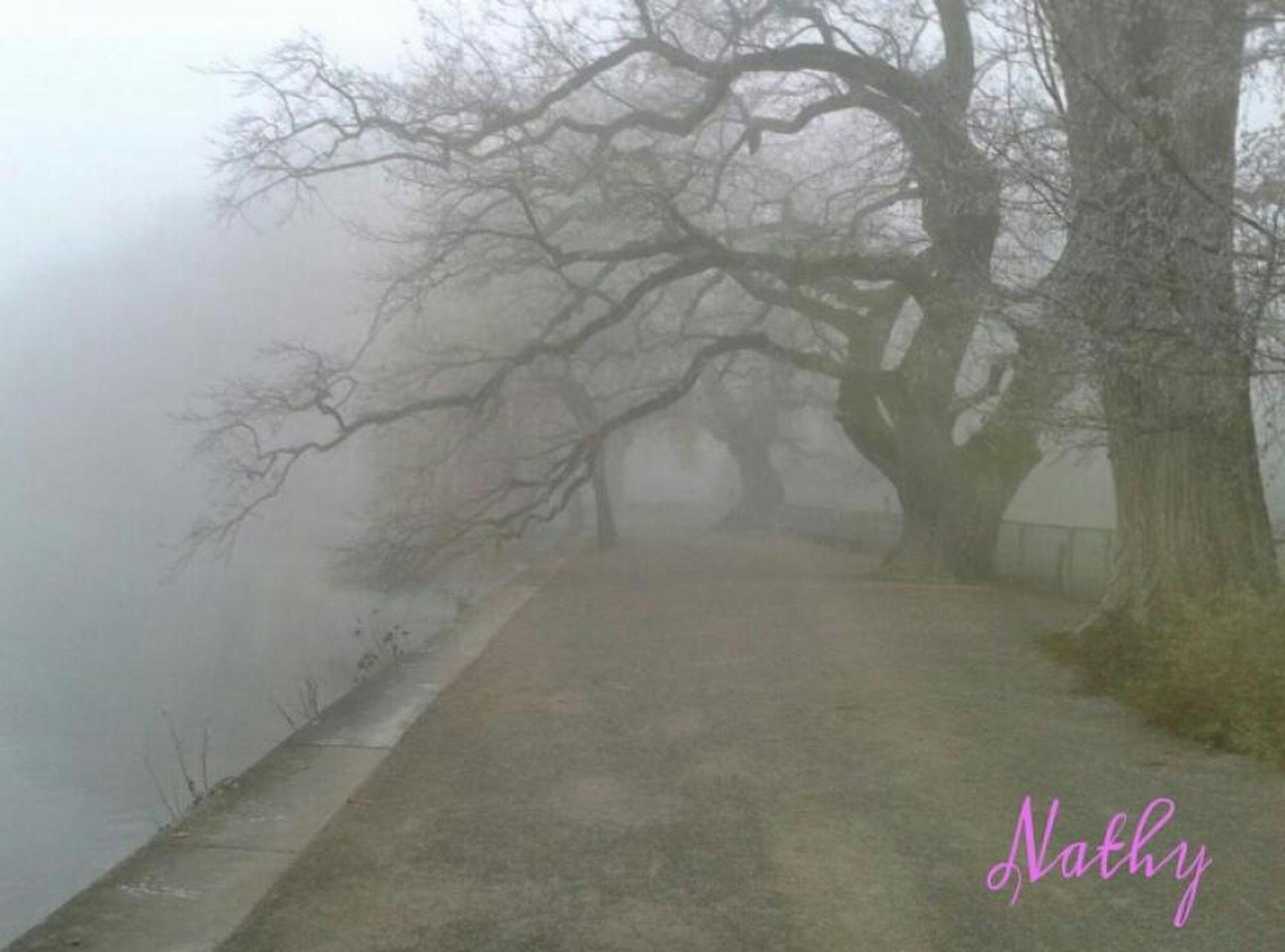 Mainau Foggy Herbst Auf Der Insel Mainau