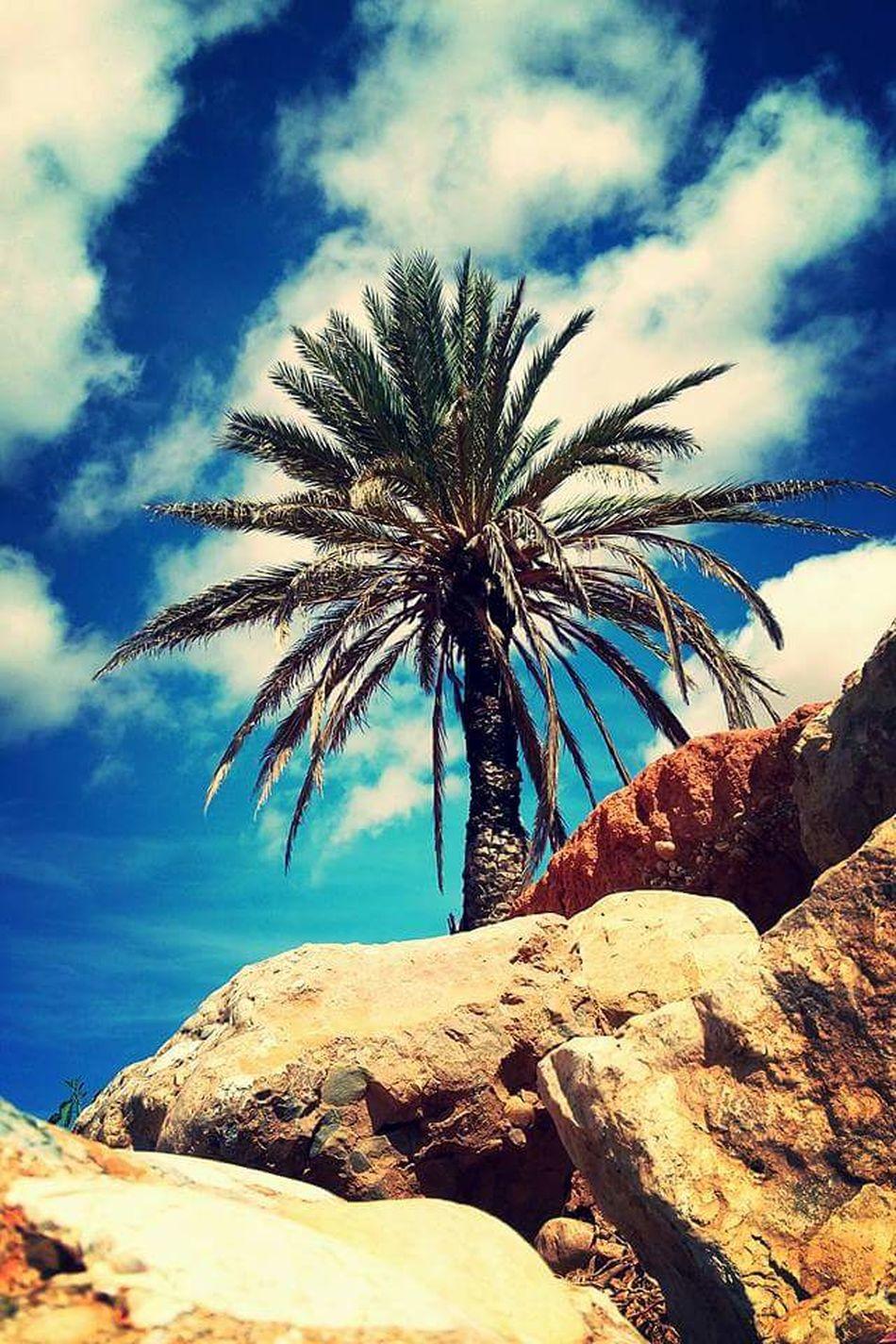 Mirleft Life Mirleft Diver El Masso Keep Calm And Shoot A Foto 📷 Hello World ✌ Plants 🌱 Palmier