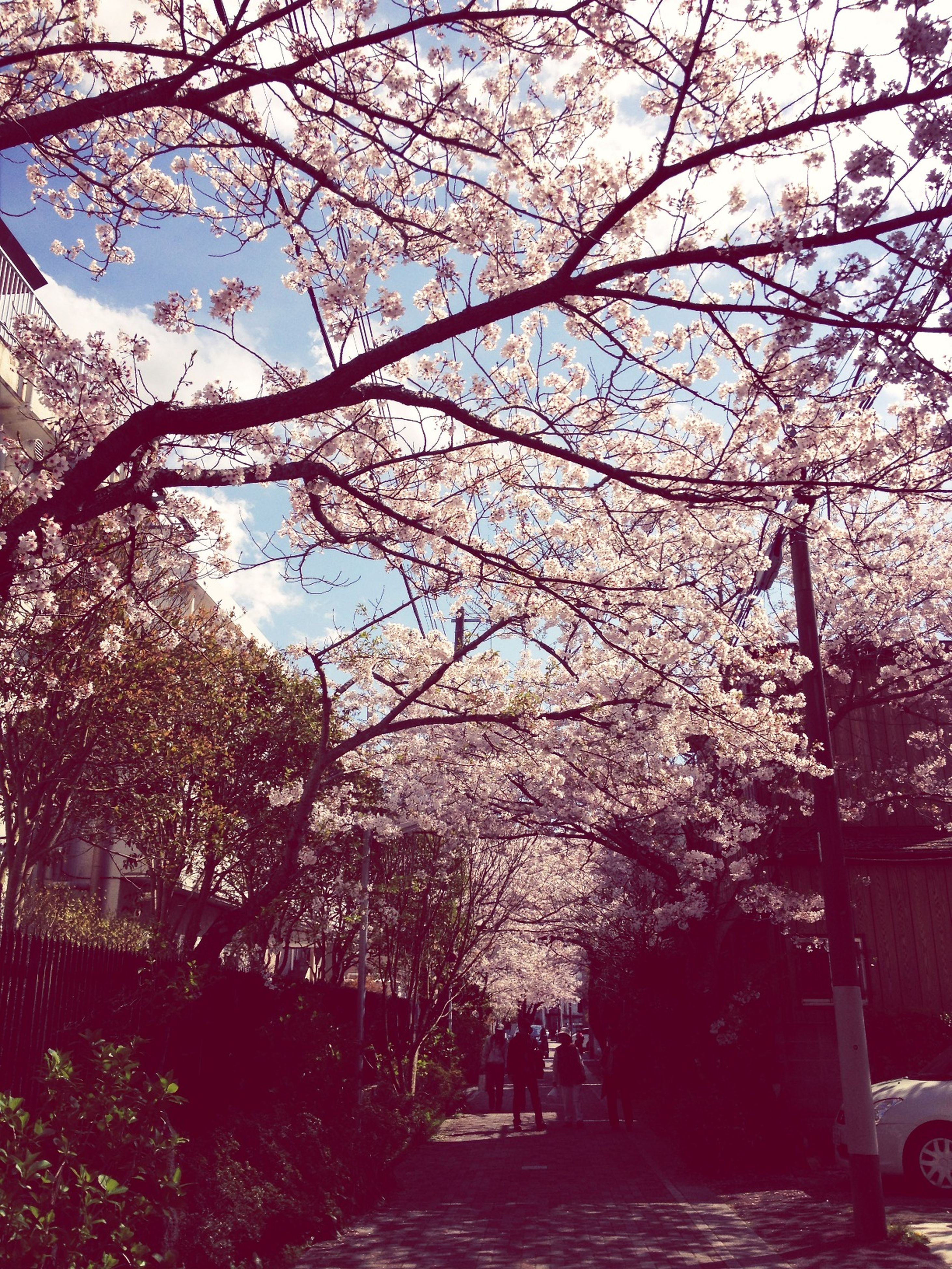 tree, branch, built structure, low angle view, growth, flower, building exterior, architecture, street light, nature, lighting equipment, sky, day, the way forward, outdoors, sunlight, tree trunk, blossom, transportation, no people