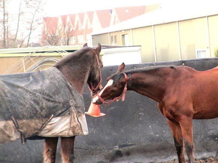 Cedric and Honey in the paddock💗 Horse Horses ❤ Pferd Staljasper Pony Paard 😚 Mooi Lovethepicture Pferde Cute Sweet Beautiful Outside Lieffff Paddock Picbyme Love