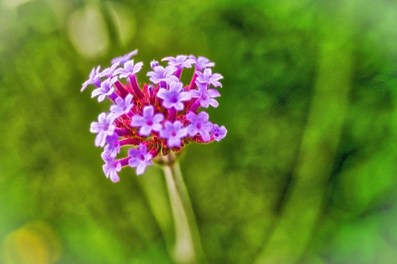 Flowers Flowers,Plants & Garden Blume Blumen Plant Plants Plants And Flowers Nature Nature_collection
