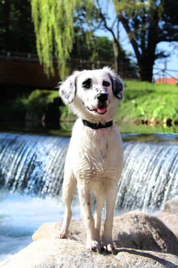 Dog River Riverside Whater English Setter Puppy Italy Valley Holiday Harley