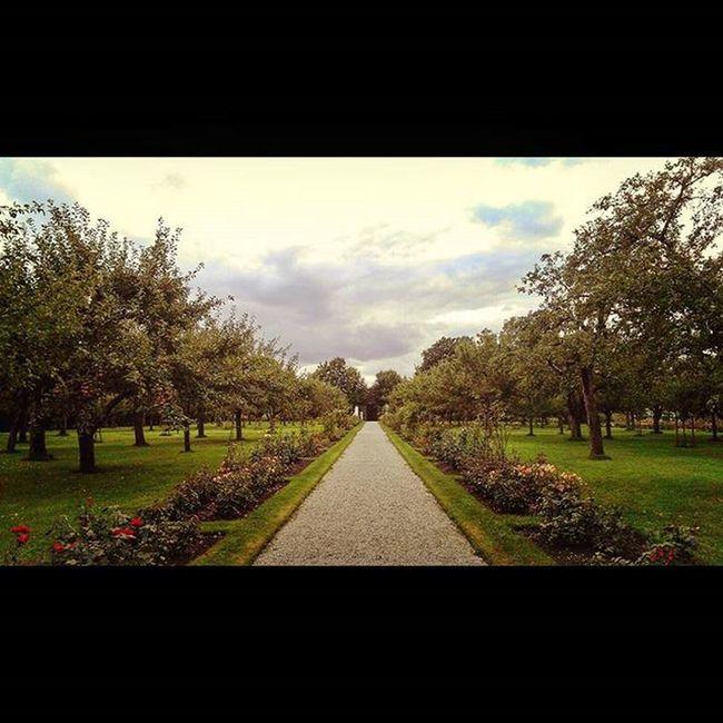 Pathway Schloss Dachau Trees