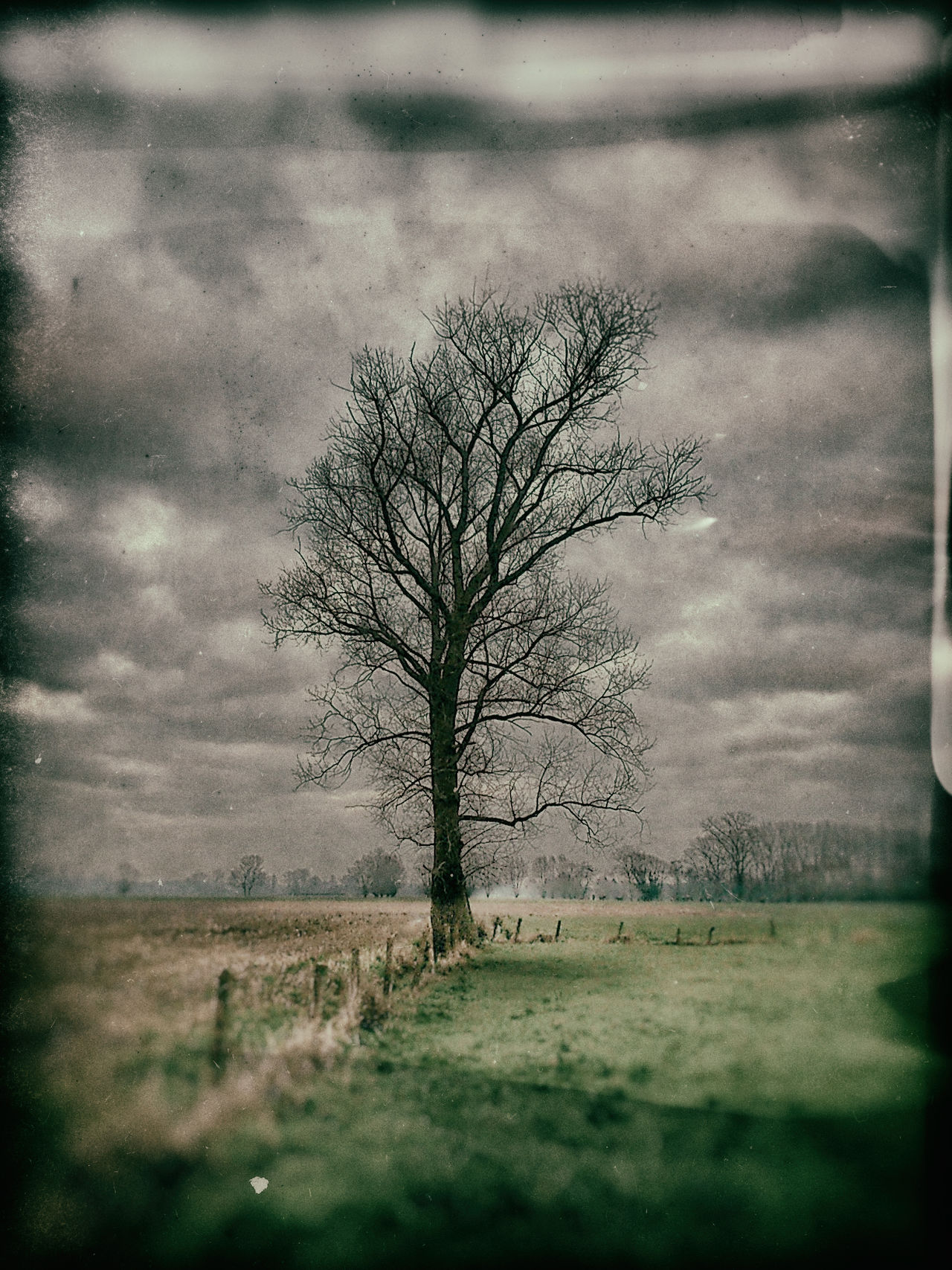 Bare Tree Beauty In Nature Being Creative Branch Day Extreme Edit EyeEm Best Edits EyeEm Best Shots EyeEm Nature Lover Field Grass Landscape Lone My Art, My Soul... My Unique Style Nature No People Outdoors Popular Photos Sky Sony ILCA-68K Taking Photos Tranquil Scene Tranquility Tree