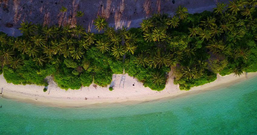 Aerial flying drone view of Maldives white sandy beach on sunny tropical paradise island with aqua blue sky sea Aerial Aqua Beach Bird's Eye View Blue Drone  Flying Holiday Island Maldives Nature Ocean Palm Trees Paradise Sandy Sea Sky Summer Sunny Tropicl Vacation White