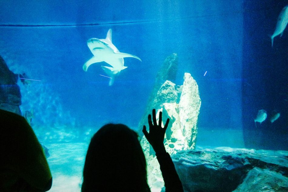 At the aquarium Fish Underwater Sea Life One Person People Sea UnderSea Shark Human Body Part Swimming Indoors  Aquarium Water Animals In The Wild Adults Only Adult Animal Themes Scuba Diving One Man Only Nature Animal Sharks Fresh 3 EyeEm Best Shots Eye4photography  TCPM