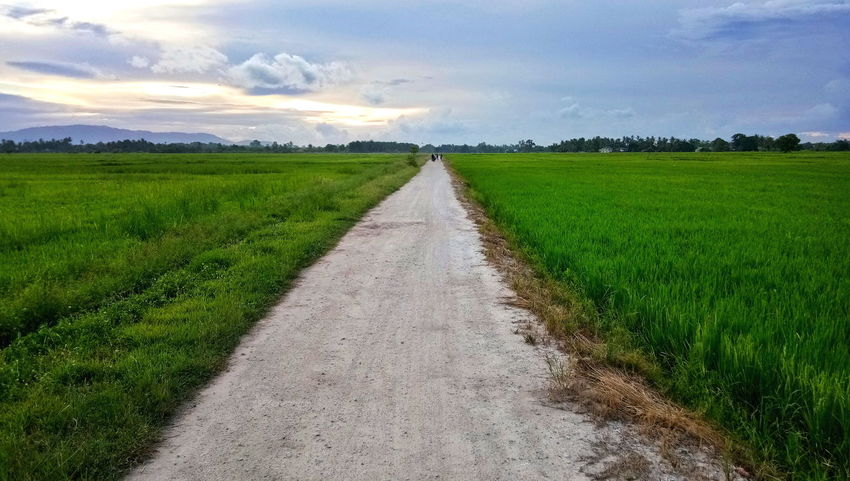 Bukit Mertajam, Penang, Malaysia.. Agriculture Field Green Color Landscape Outdoors Cloud - Sky Cereal Plant Paddy Field