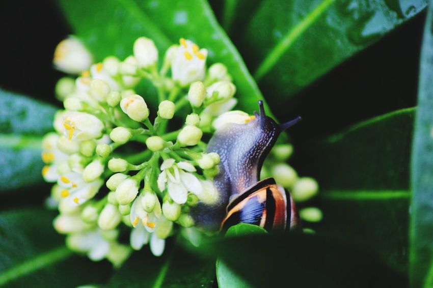 Snails come out after the rain Flower Nature Beauty In Nature Close-up One Animal Outdoors Water Rain RainDrop Spring Snail