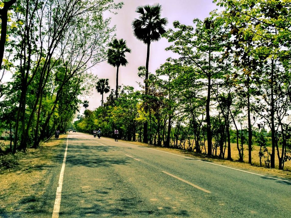 Palm Tree Tranquility Road No People Day Tree The Way Forward Tree Trunk Green Color Sky Long Goodbye Land Vehicle