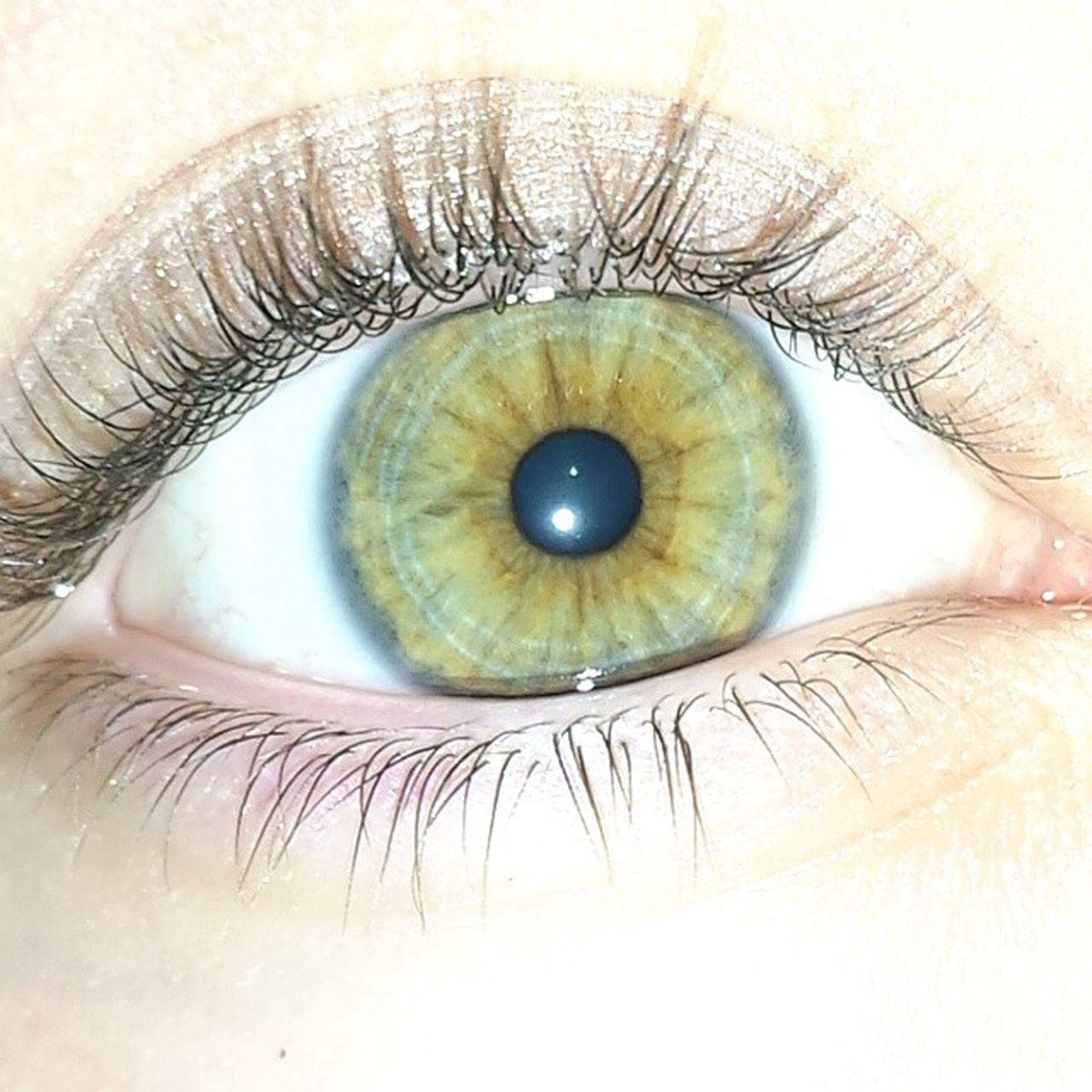 human eye, eyelash, eyesight, sensory perception, close-up, iris - eye, extreme close-up, looking at camera, eyeball, indoors, portrait, studio shot, part of, human skin, vision, unrecognizable person, white background