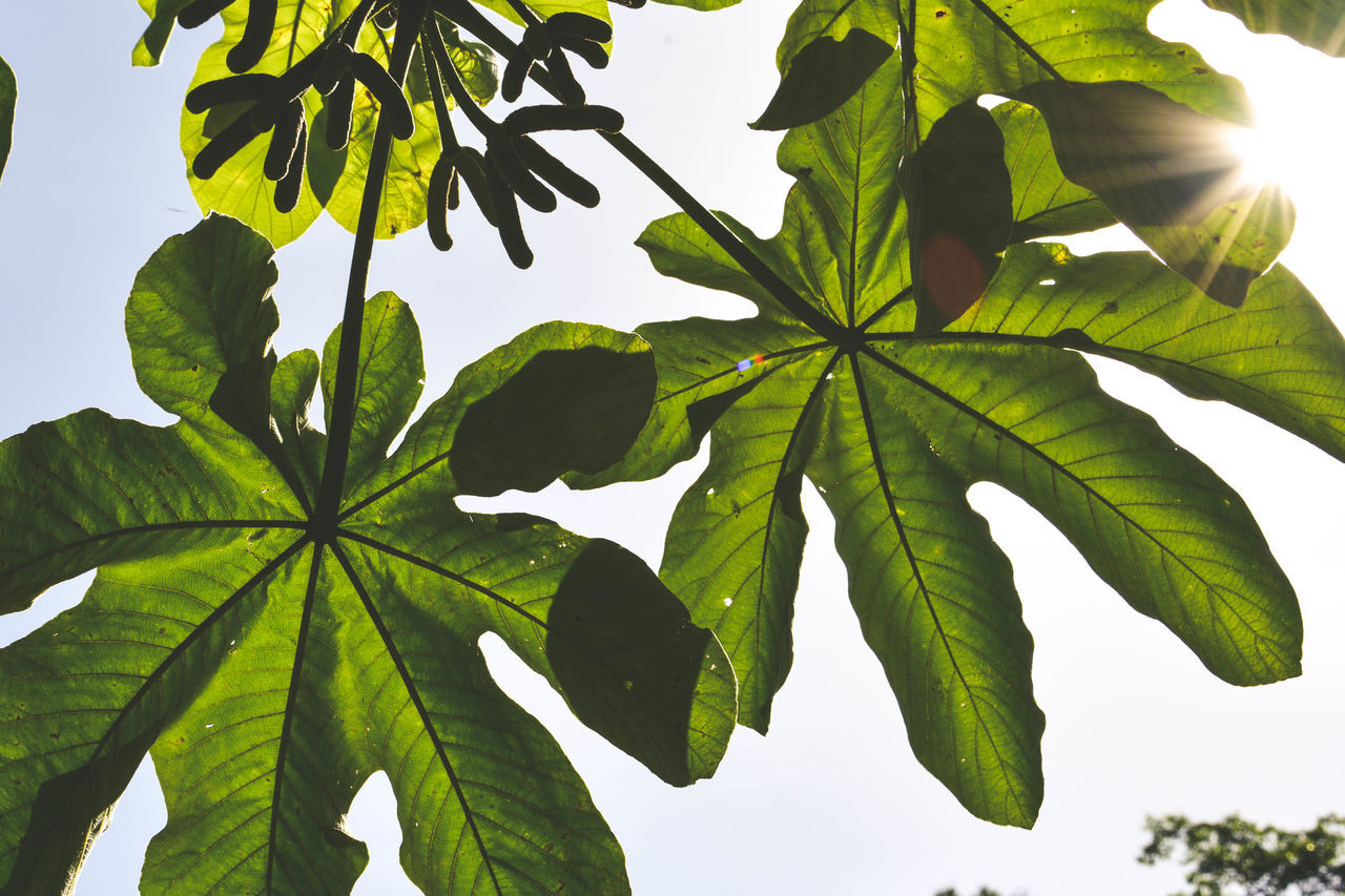 Low Angle View Mexico Seethrough Air Close-up Day Green Color Leaf Low-angle Shot Nature Plant Shadow