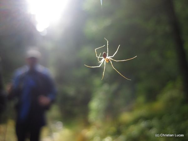 spider in the morning Animal Photography Spiders In The Forest The Purist (no Edit, No Filter) Focus On Foreground Eight Legs