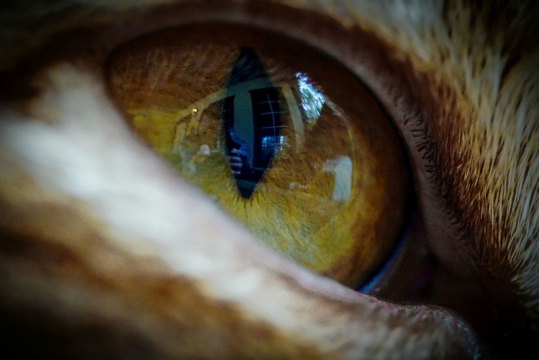 My reflection in Ricky's eye Hanging Out Taking Photos Check This Out Hello World Reflections Relaxing Hi! Enjoying Life Telling Stories Differently Focus On Foreground Capture The Moment My Favorite Photo Popular Photos EyeEm Gallery EyeEm Masterclass Getting Inspired Selective Focus EyeEm Best Shots Showing Imperfection Beautiful Depth Of Field Colors Color Photography The Portraitist - 2016 EyeEm Awards Cat