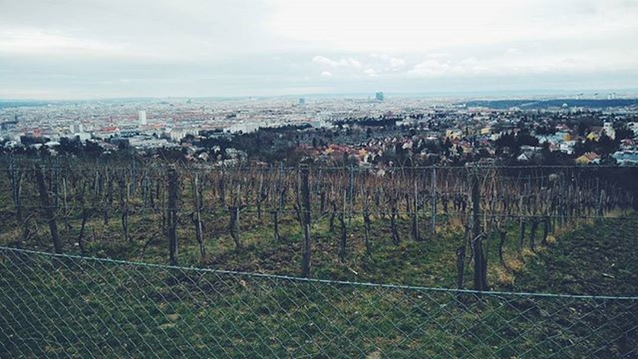 A different view of Vienna. Vienna Wien Landscape Österreich Weather Weekend Welovevienna Austria City Viewofthecity Vineyard Colors Photooftheday Fromthetop Fromwhereistand Glimpse Instagramers OnePlusX Viennacity Vienna_city View