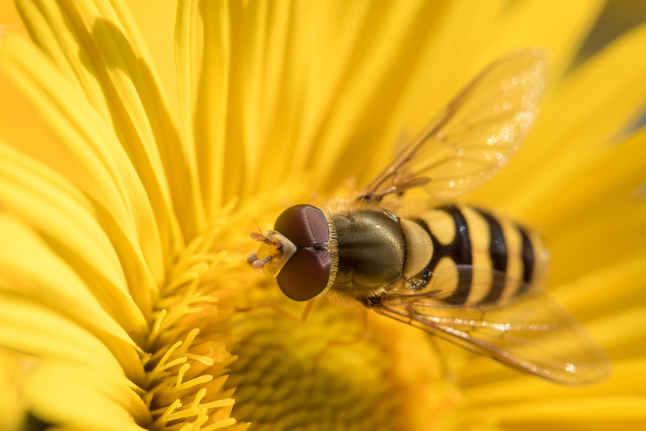 Beautiful stock photos of insects, Animal Themes, Animal Wildlife, Animal Wing, Animals In The Wild
