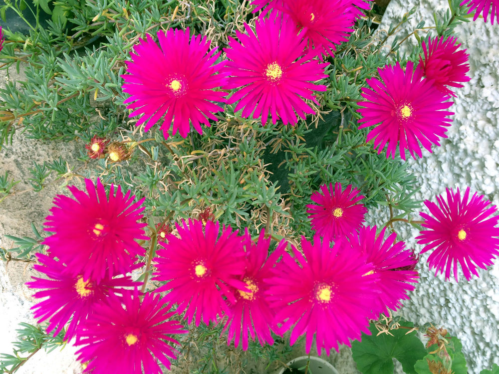 spring is in the air Beauty In Nature Blooming Close-up Flower Growth Magenta Flowers Nature Uncultivated