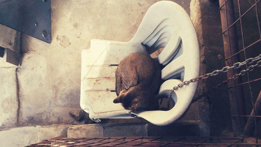 Streetcat Sleep