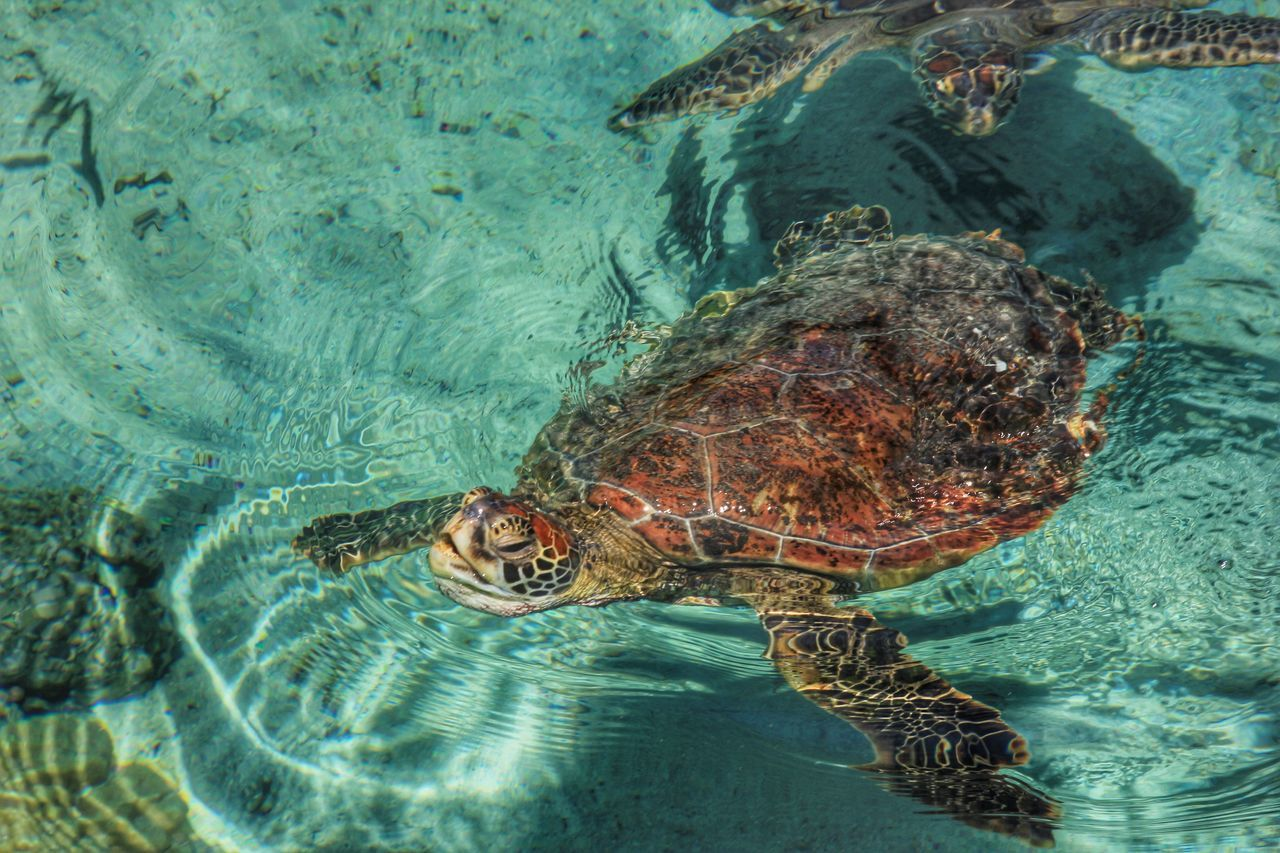 Beautiful stock photos of turtle, Animal Themes, Animals In The Wild, Beauty In Nature, Day