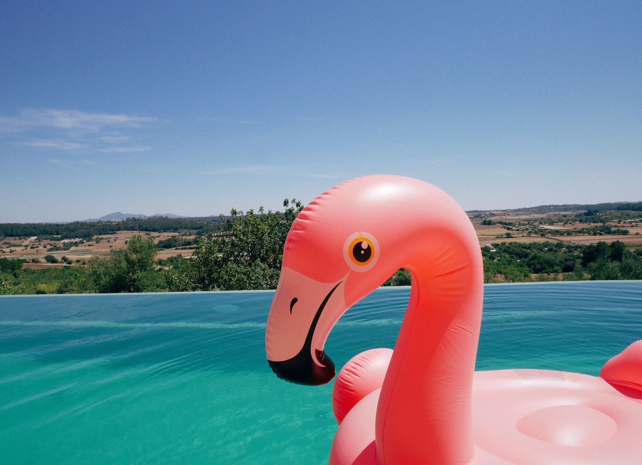 Inflatable  Water Animal Representation Inflatable Ring Toy Sea Flamingo Day Swimming Pool No People Sky Outdoors Nature Close-up Summer Summertime Summer Views Pool
