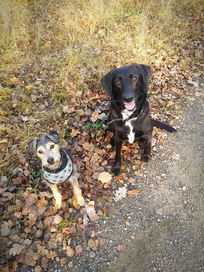 Mydogs Lovemydogs Nature Atumn Dog❤