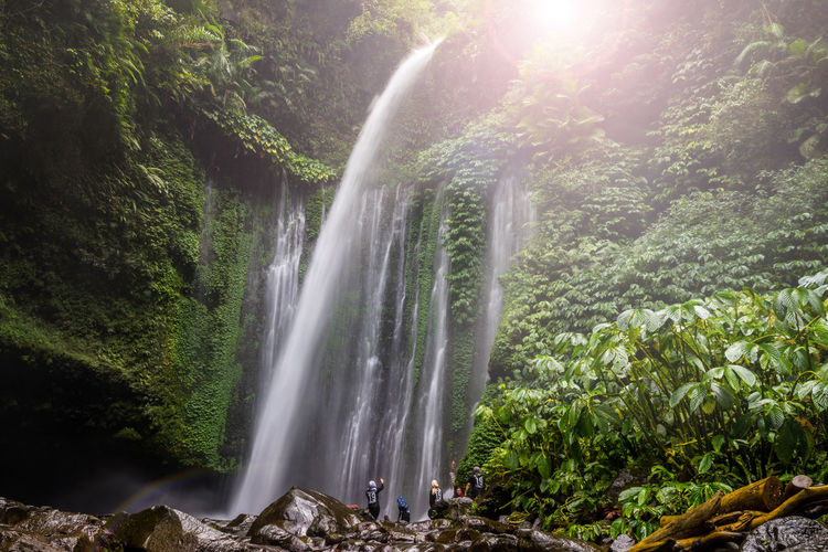 View of Tiu Kelep waterfall near Rinjani, Senaru, Lombok, Indonesia Forest Lombok-Indonesia Rinjani Mountain Rinjani National Park Tiu Kelep Tourism Tourism Destination Waterfall