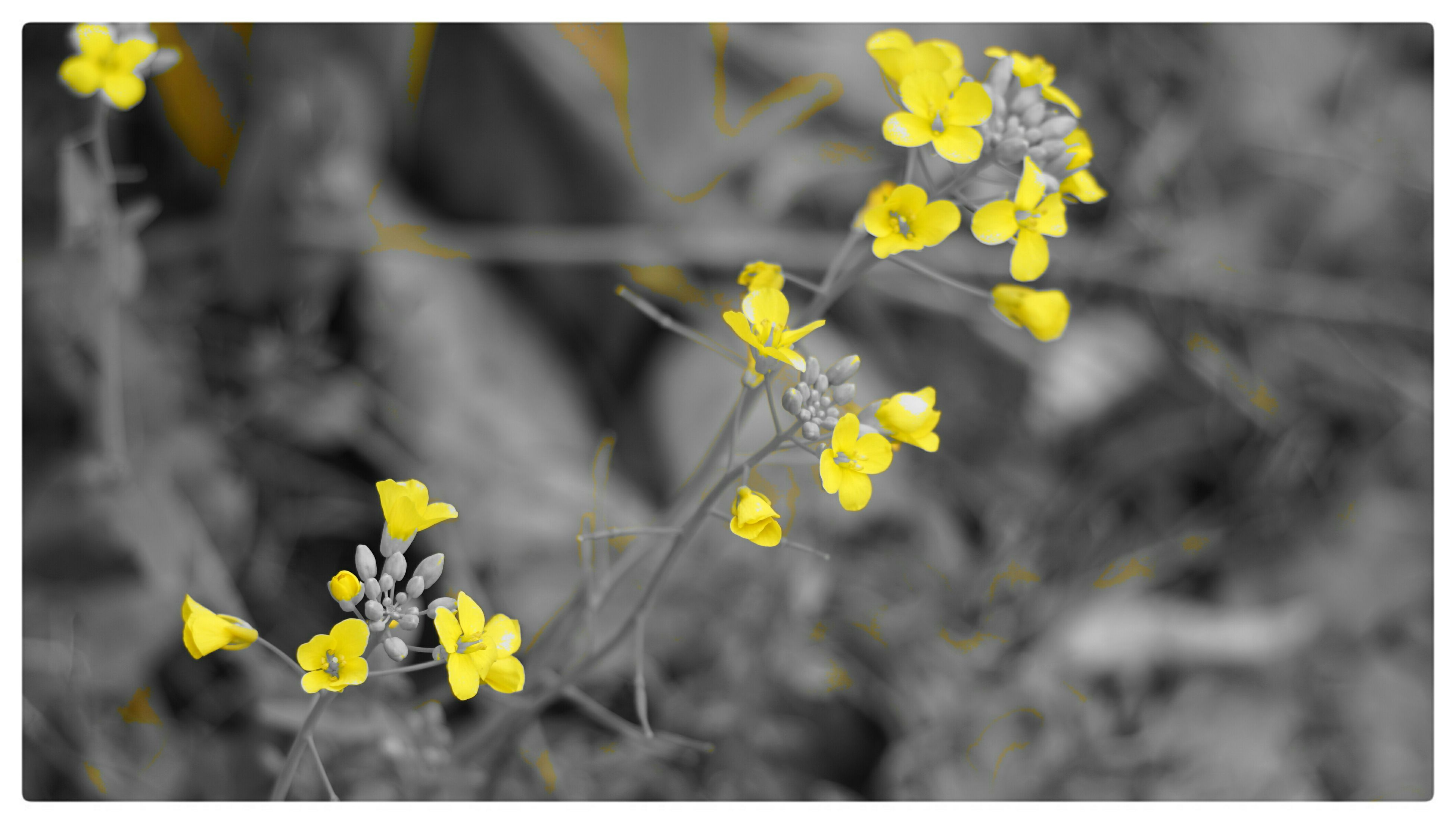 flower, yellow, freshness, fragility, growth, focus on foreground, petal, transfer print, beauty in nature, plant, nature, blooming, flower head, close-up, stem, wildflower, selective focus, field, in bloom, auto post production filter