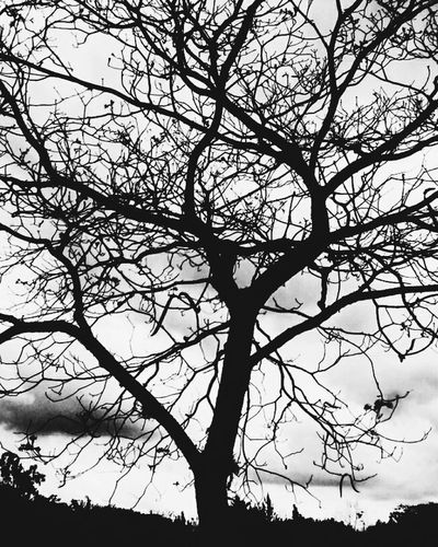 Relaxing Tree Blackandwhite Black & White