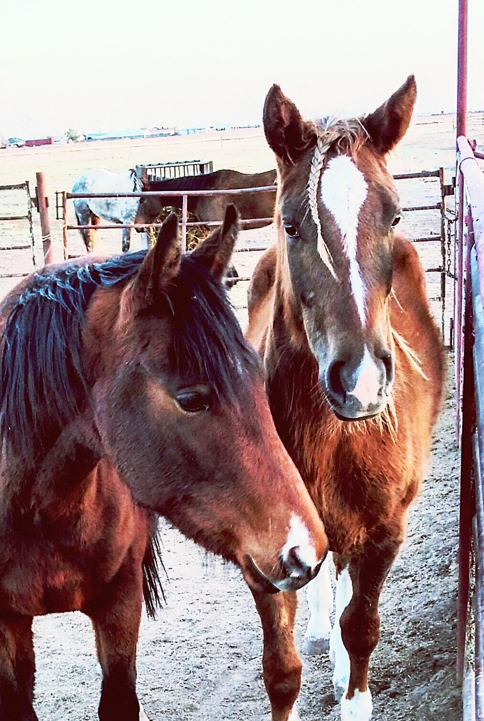 Ranch horses Horse Animal Themes Domestic Animals Mammal Brown Livestock Herbivorous Working Animal No People Nature Day Adult Animal Outdoors Sky Togetherness Close-up Barn Ranch Ranch Life Farm Cowboy Country Life Stable Mane Paddock