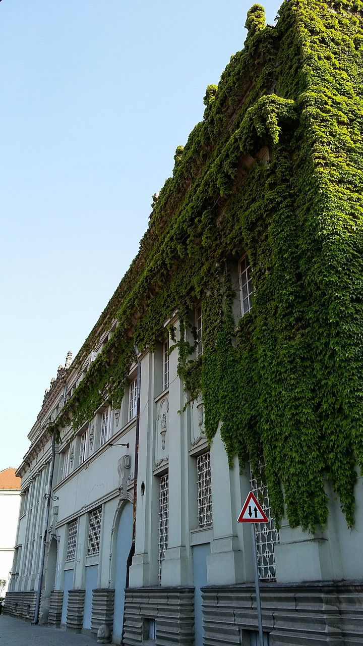 architecture, built structure, building exterior, day, growth, low angle view, clear sky, no people, outdoors, tree, sky