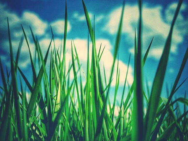 Nature_collection Grass Green Green Green!  Green Grass EyeEm Nature Lover