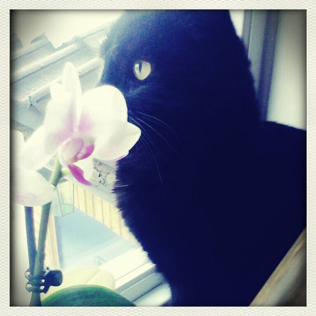 Catdreaming