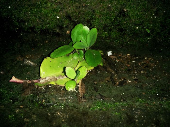 Nature Nature Leaf Water Green Color Growth Outdoors No People High Angle View Day Beauty In Nature Plant Floating On Water Water Lily Close-up Freshness Lily Pad Fragility