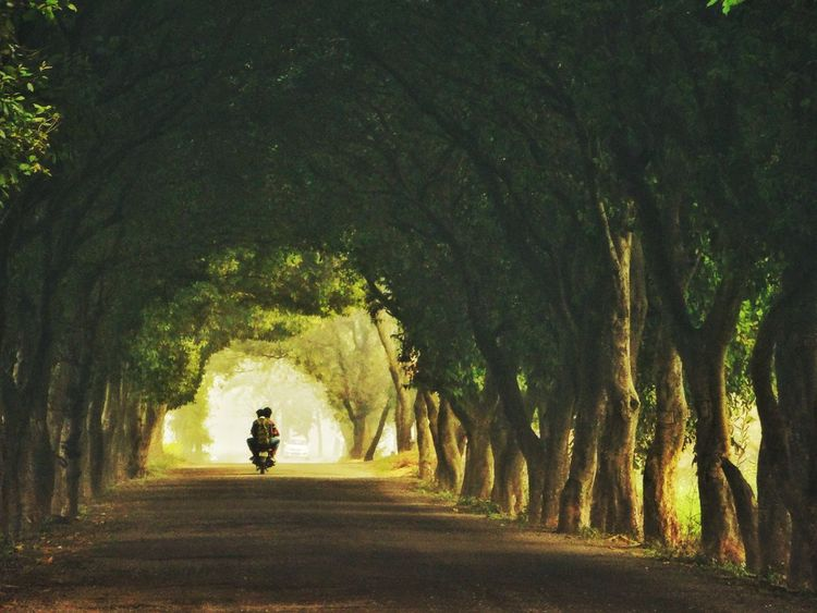 Green Tunnel Tree Nature Road Beauty In Nature Shadow Go Green Feel Green Green Nature Green Green Green!  Tunnel View