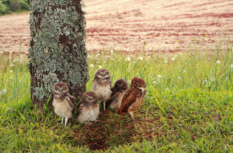 Animal Wildlife Animals In The Wild Beauty In Nature Owl Photography OWL Shoot Owl Owllife Animal Themes Beautiful ♥ Beautiful Nature Family No People Canon_official Canon Owls💕 Close-up
