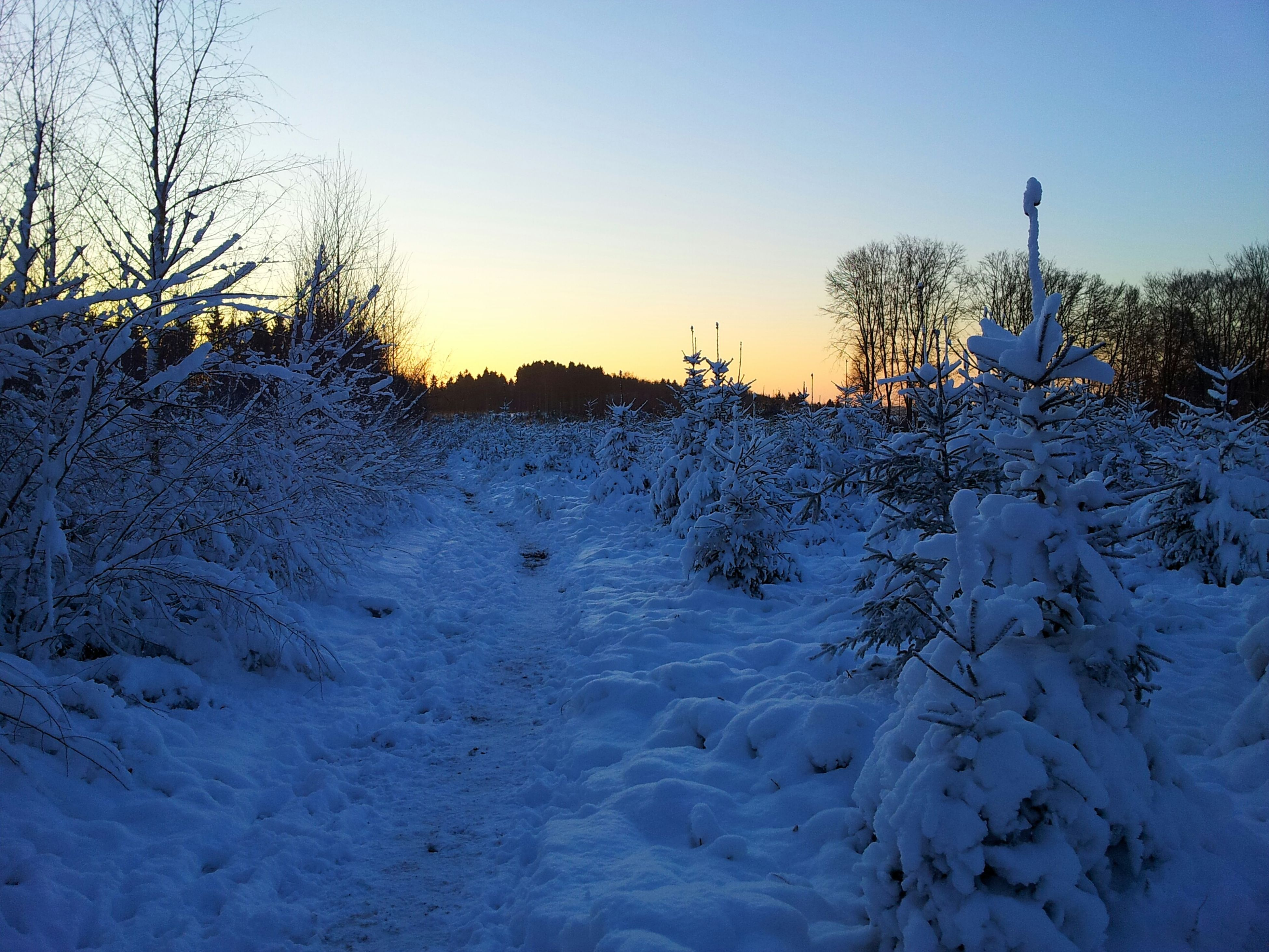 snow, winter, cold temperature, season, clear sky, weather, tranquil scene, tranquility, frozen, covering, scenics, nature, beauty in nature, landscape, bare tree, tree, field, sunset, copy space, sky