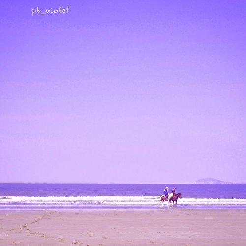 신두리해변 바다 승마 Nature Sea Seaside Coast Beach Ocean View Landscape Horse Riding Fineart Violet Pastel Color Retouching