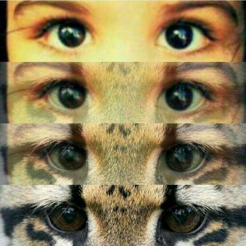 Eyes Black Eyes Yeux Yeux Noirs