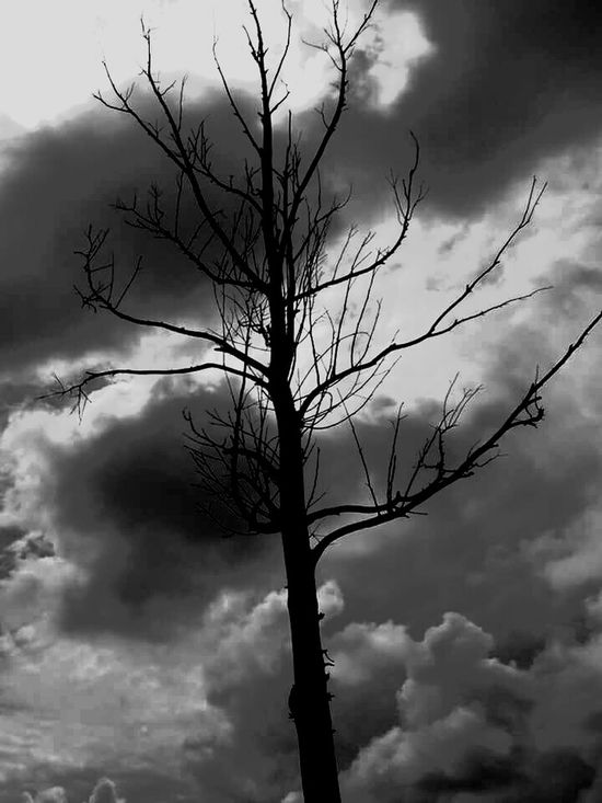 Art Trees And Sky Day Beauty In Nature Black & White Nature Sky No People Architecture Impossible Moments Detalles Maravillosos Amazing Architecture Mexico Storm Cloud Branch Desaturated Outdoors Tree Bare Tree Cloud - Sky Silhouette Reflection Arts Culture And Entertainment Arte_of_nature Artistic Expression BellosMomentos