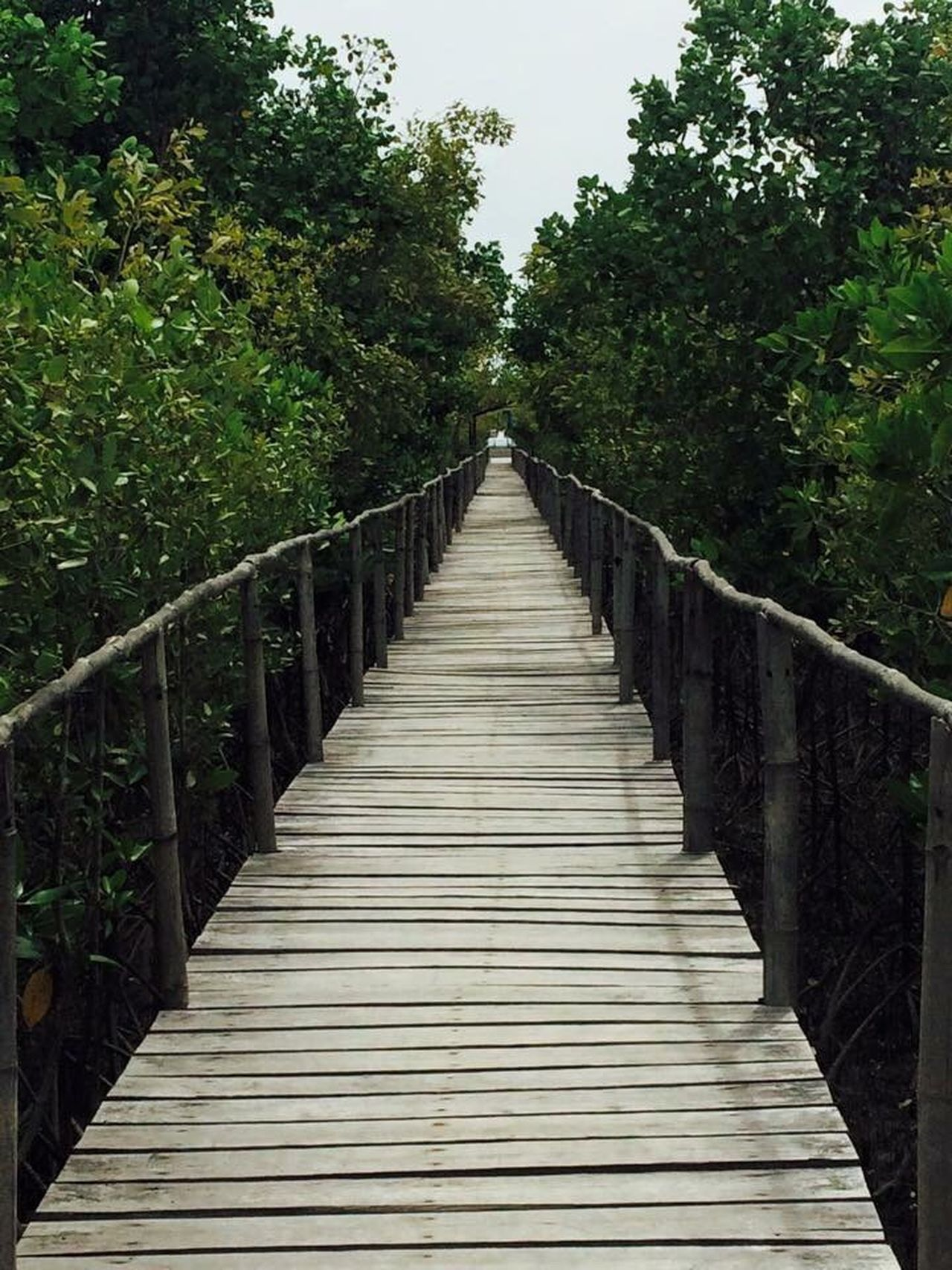 Mangrove park Philippines Tree The Way Forward No People Mangroves EyeEmNewHere