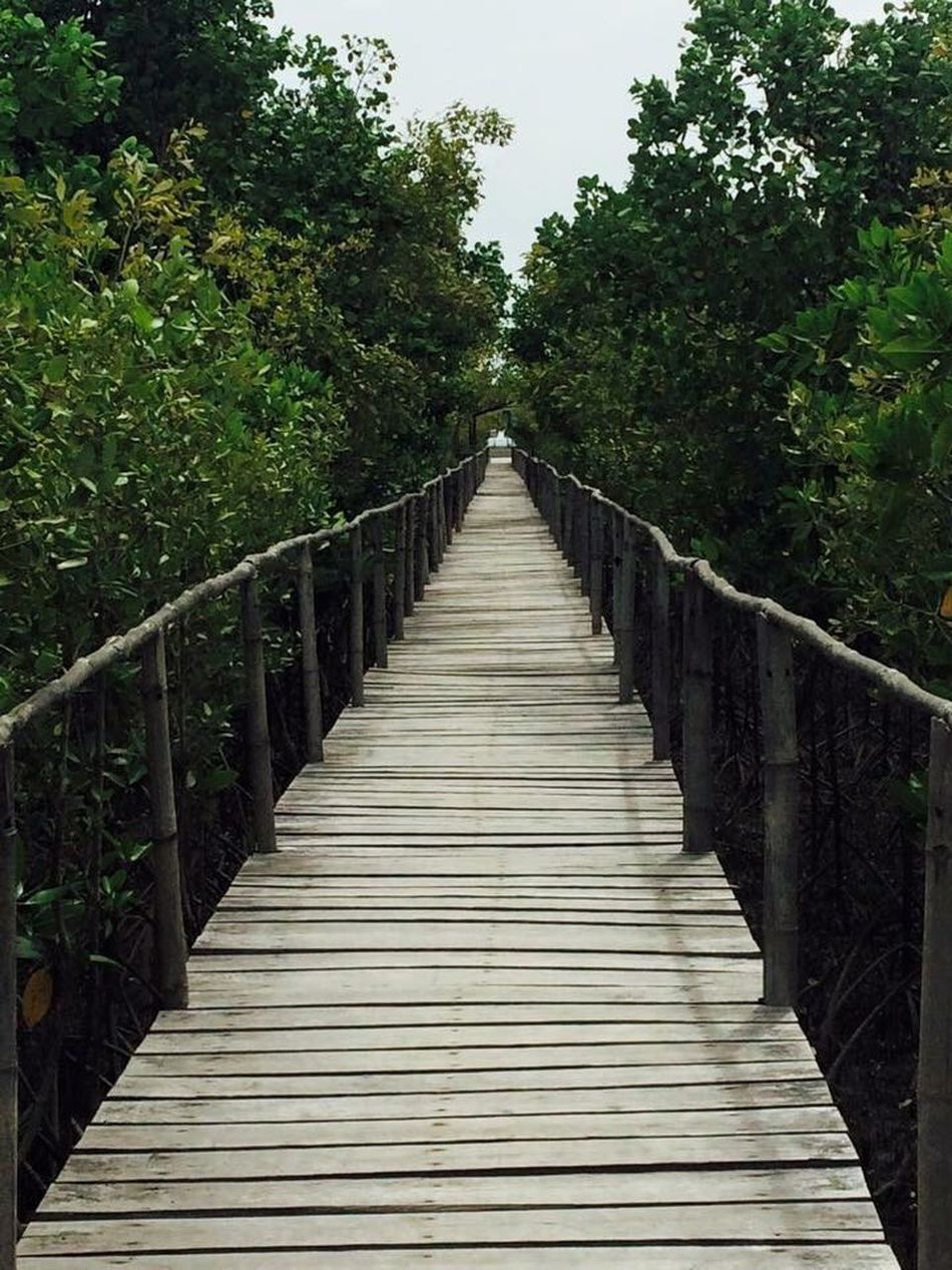 Mangrove park Philippines Tree The Way Forward No People Mangroves EyeEmNewHere