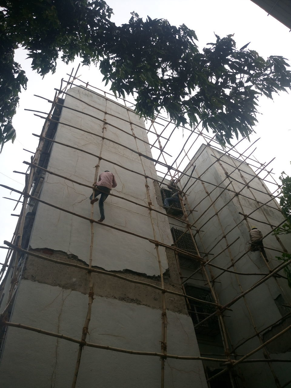 architecture, building exterior, low angle view, built structure, real people, one person, men, working, day, occupation, outdoors, full length, tree, manual worker, window washer, young adult, people