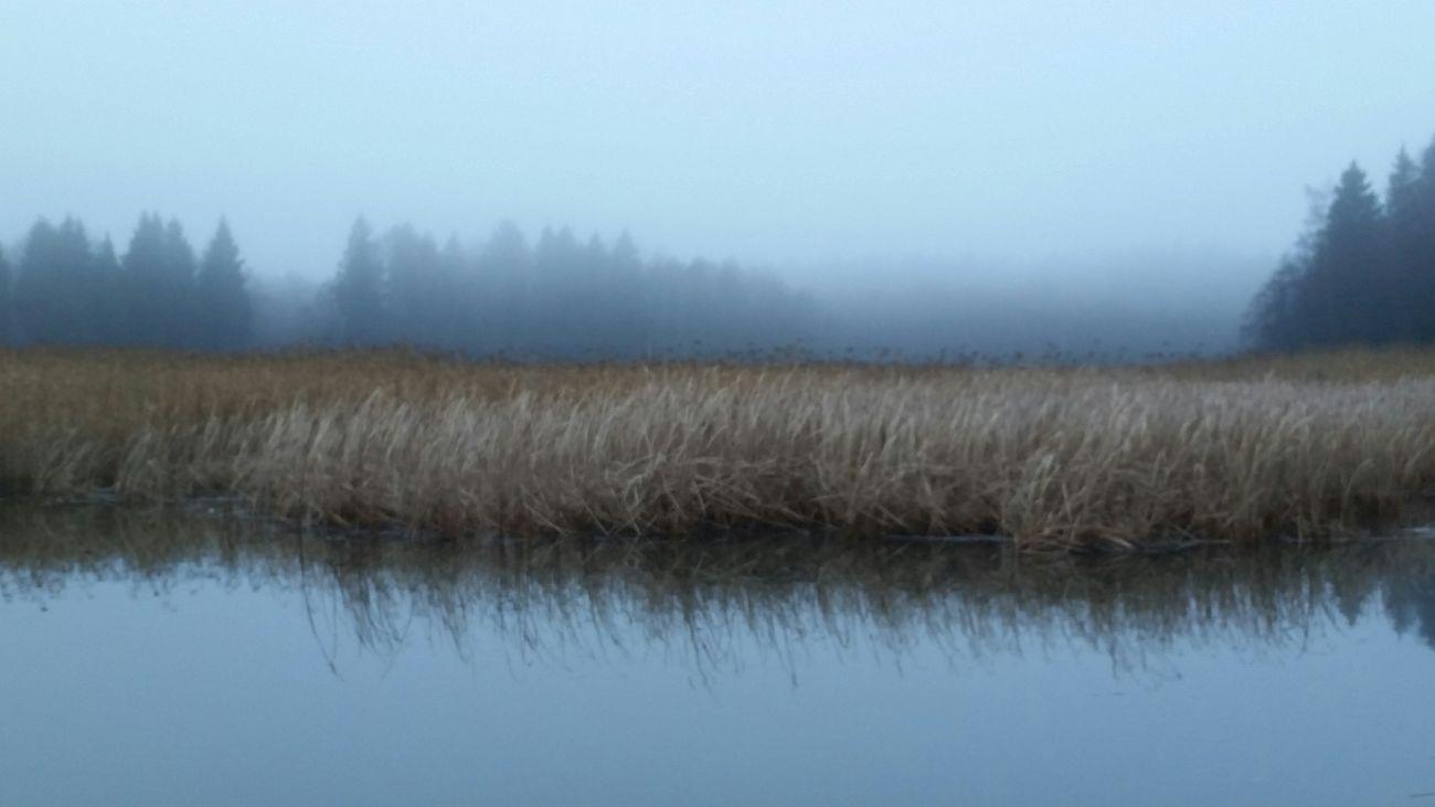 выборгский район ленобласть Финский залив туман Природа прогулка природа, река, красиво Nature Nature_collection Gulf Of Finland Fog