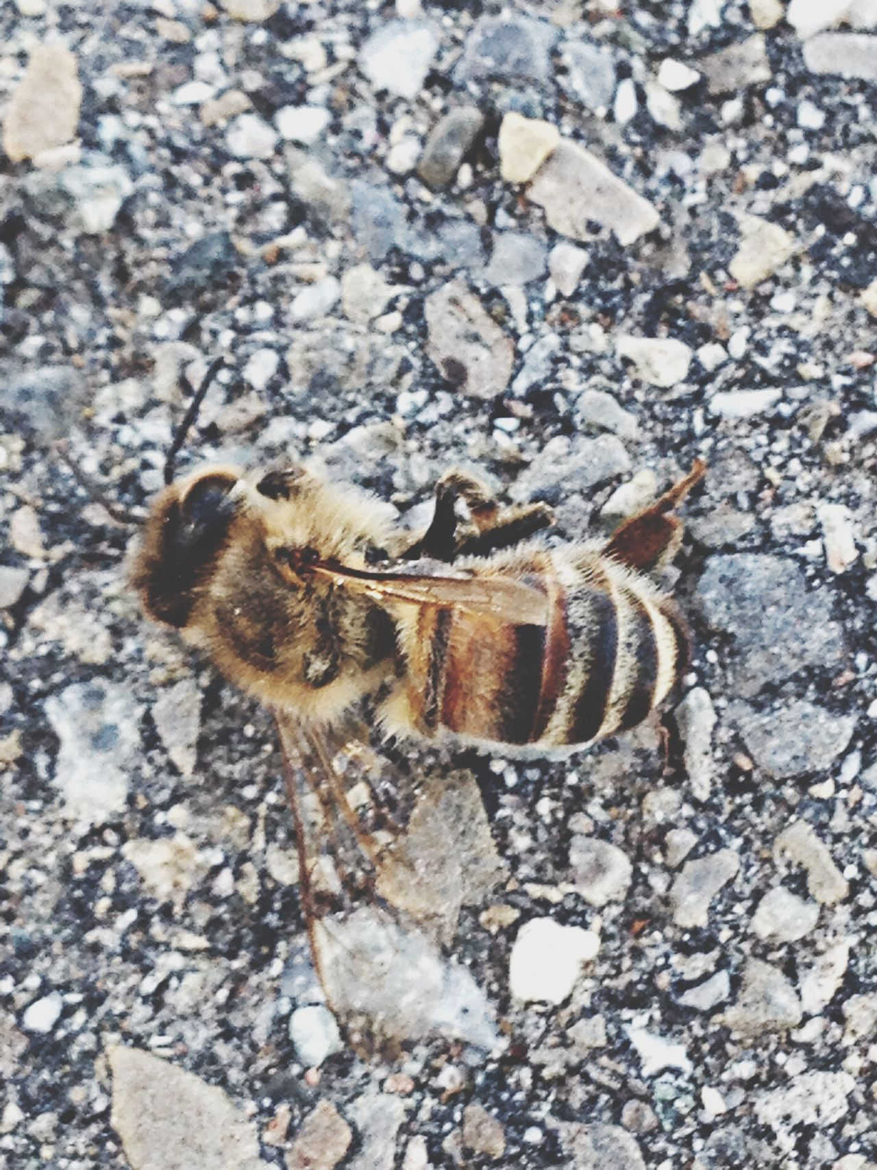 Beautiful stock photos of death, Bee, Close-Up, Day, Dead