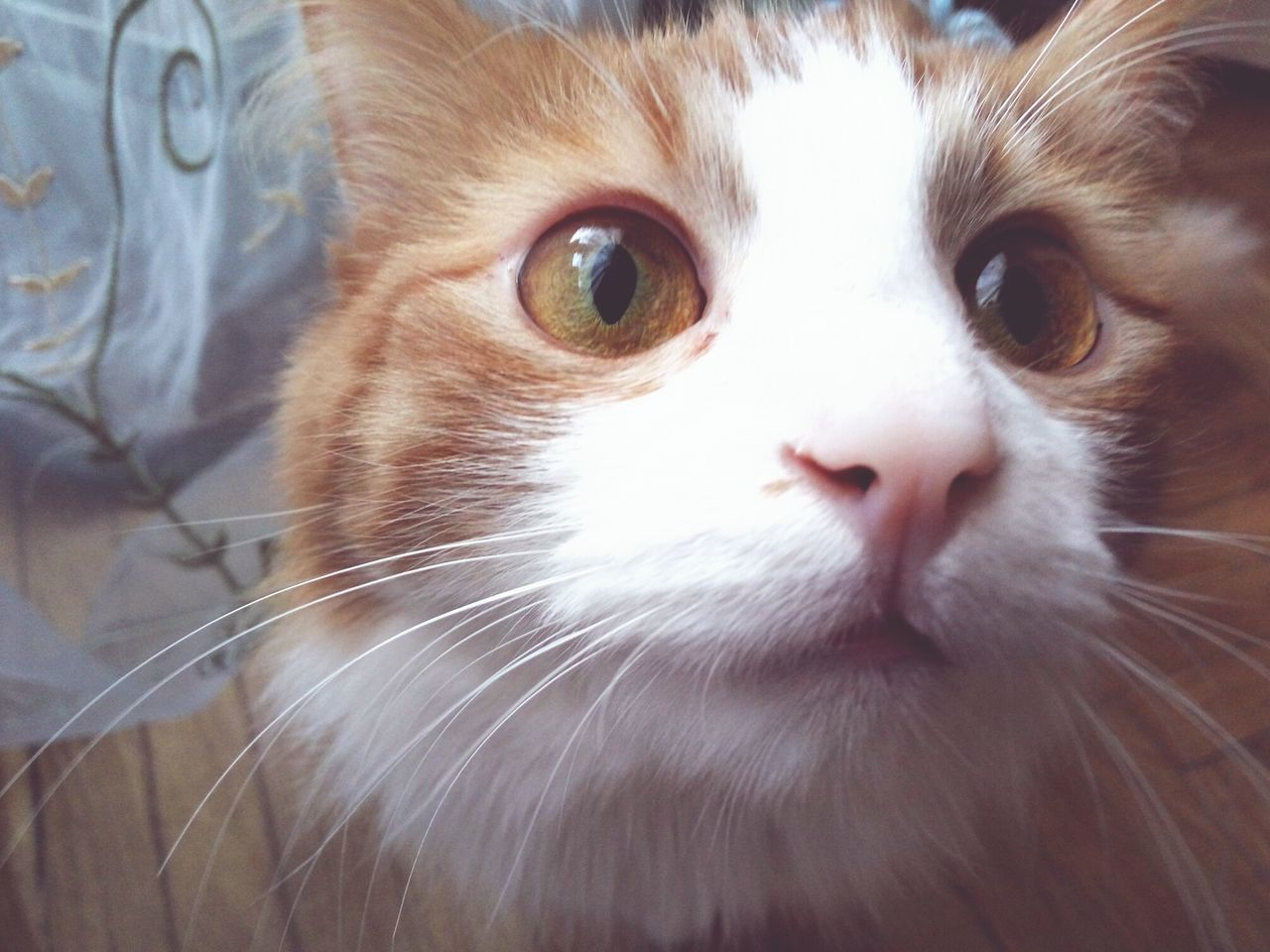 pets, domestic animals, animal themes, domestic cat, one animal, mammal, whisker, feline, close-up, no people, looking at camera, indoors, portrait, day