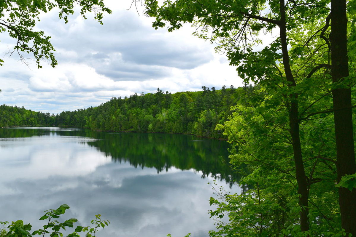 Beauty In Nature Branch Calm Cloud - Sky Gatineau Park Green Color Growth Idyllic Lake Majestic Mirror Nature Non-urban Scene Pink Lake Plant Reflection Scenics Sky Tourism Tranquil Scene Tranquility Tree Tree Trunk Vacations Water