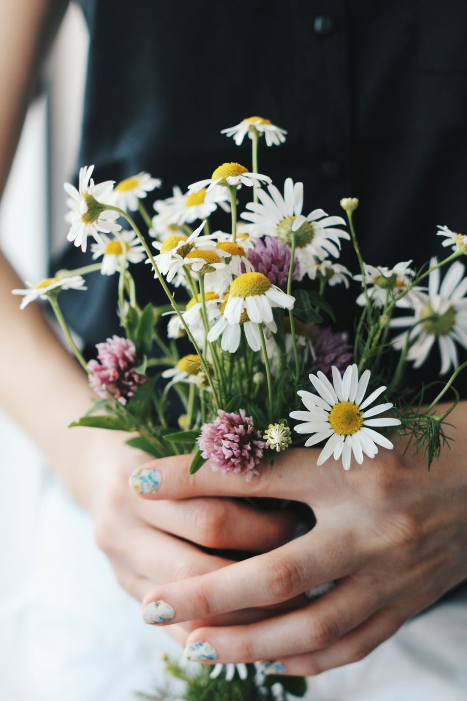 Beautiful stock photos of flowers, Blossom, Bunch, Close-up, Daisy