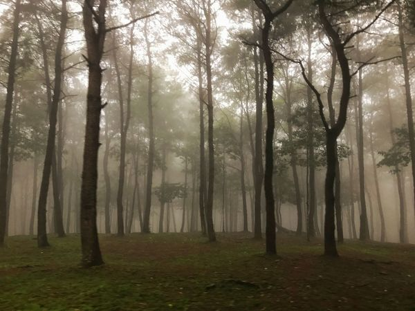 Lost In The Landscape Tree Nature Fog Forest Tranquility Landscape Tranquil Scene Beauty In Nature Mist Hazy  No People Scenics Outdoors Day Bavi Hanoi