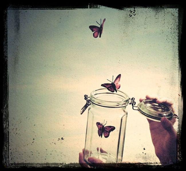 Butterfly Sky Free
