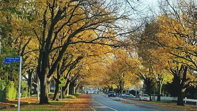 Autumn Colors Palmerston North Nz First Eyeem Photo