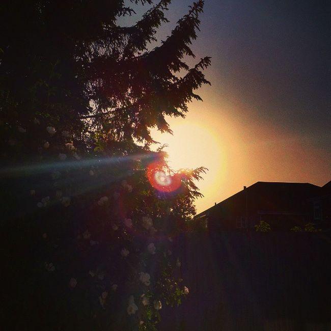 ✌💕🌅 Loveit Sunny Lush Lushweather Clearsky Bluesky Beautifulscenery Sunset Beautifulday Lushview Orangesky Beautiful Tree